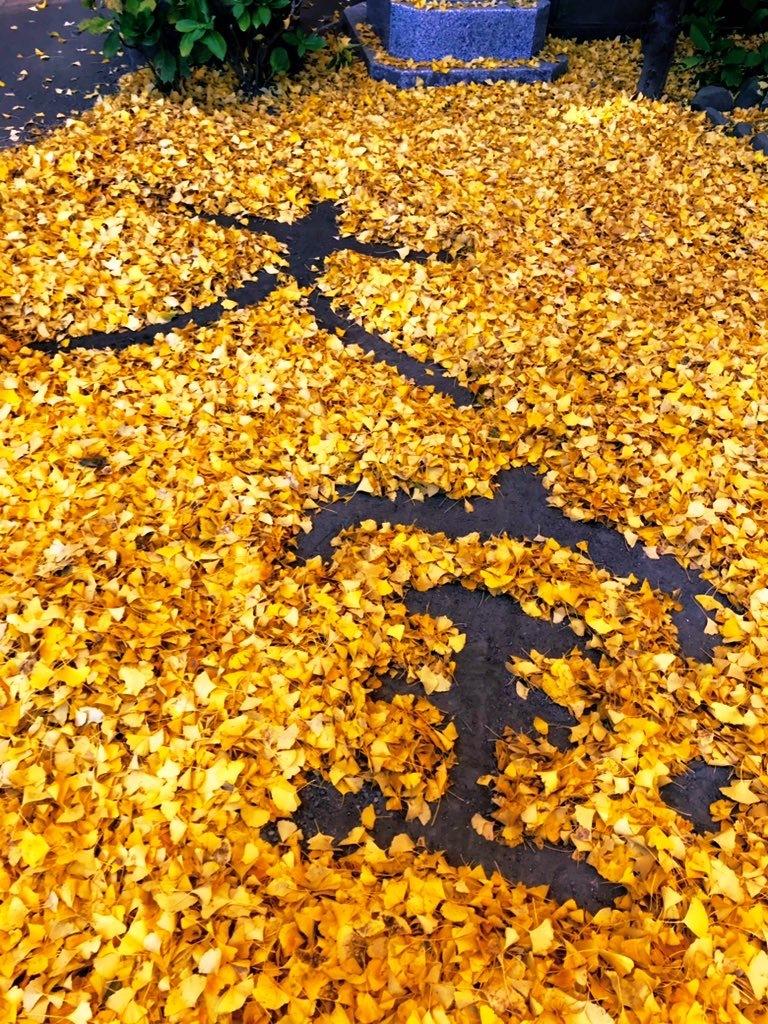 大銀杏の落ち葉で描いた大宝の文字
